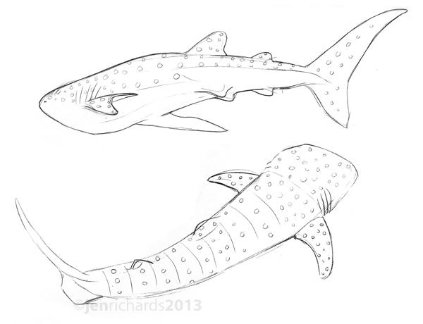 600x460 Drawn Shark Whale Shark