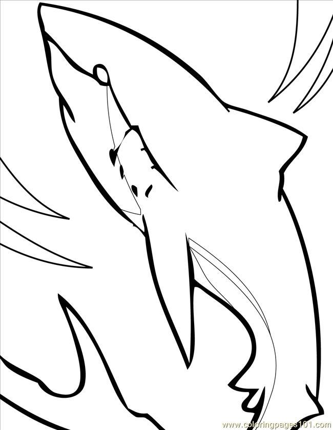 650x841 Bull Shark Clipart Line Drawing