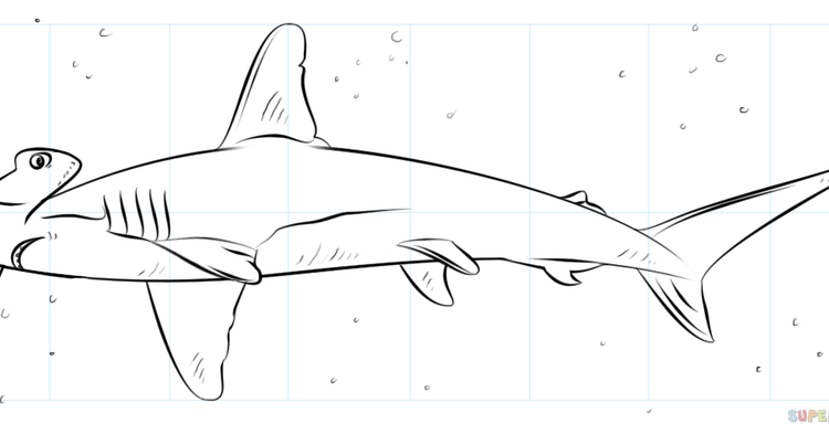 750x384 Shark Drawings Step By Step How To Draw A Hammerhead Shark Step