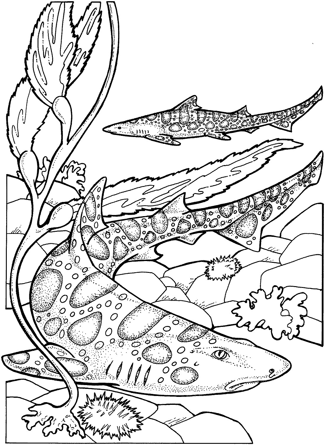 1101x1507 Coloring Page Of A Tiger Shark Best Of Drawn Tiger Shark Mean