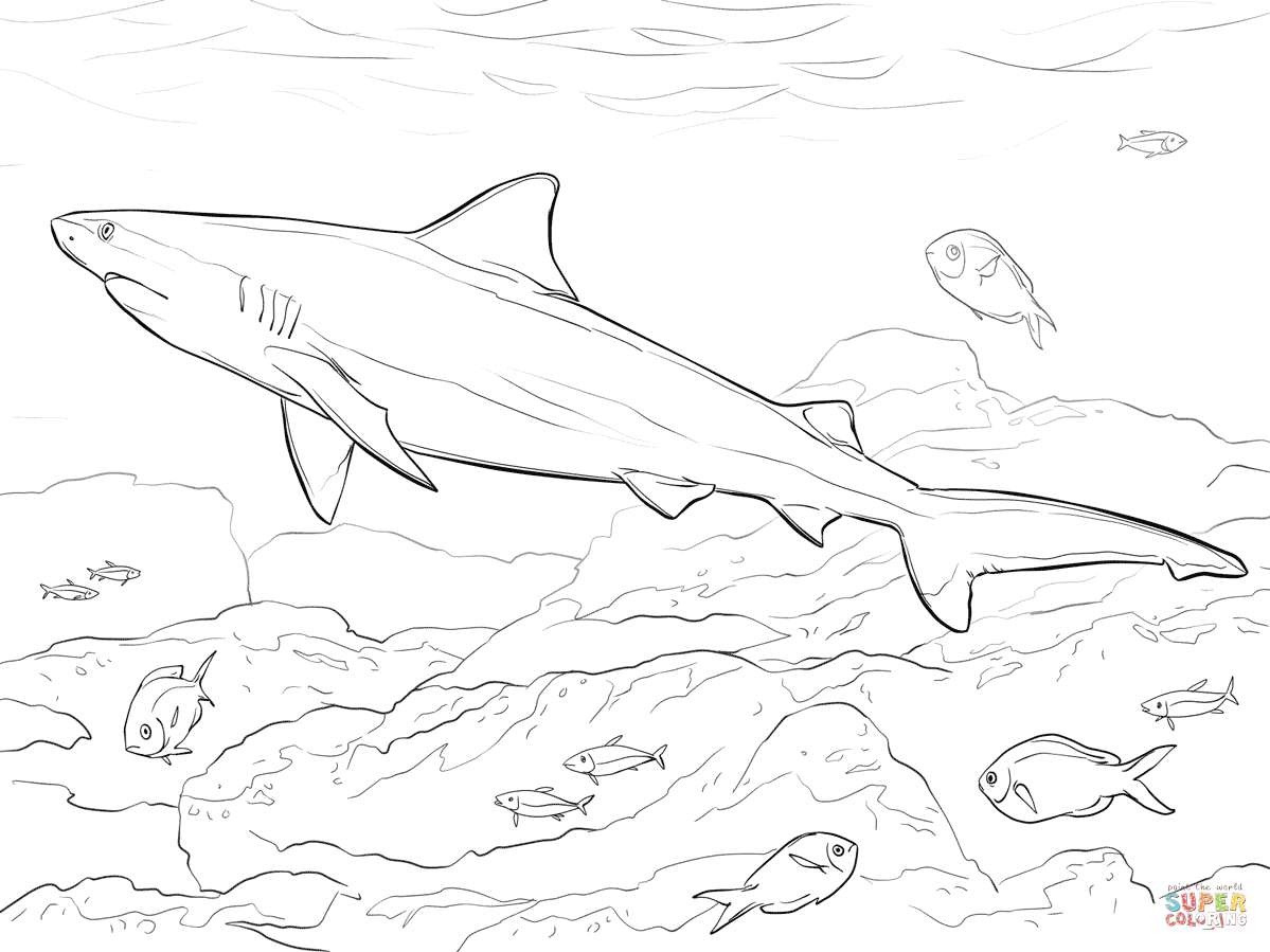 1199x899 Realistic Bull Shark Coloring Page Free Printable Pages