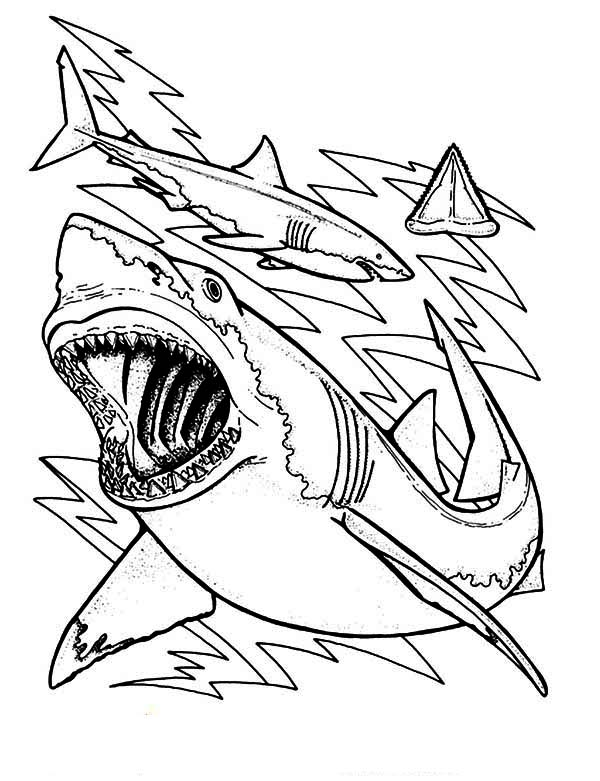Shark Teeth Drawing At Getdrawings Free For Personal Use Shark