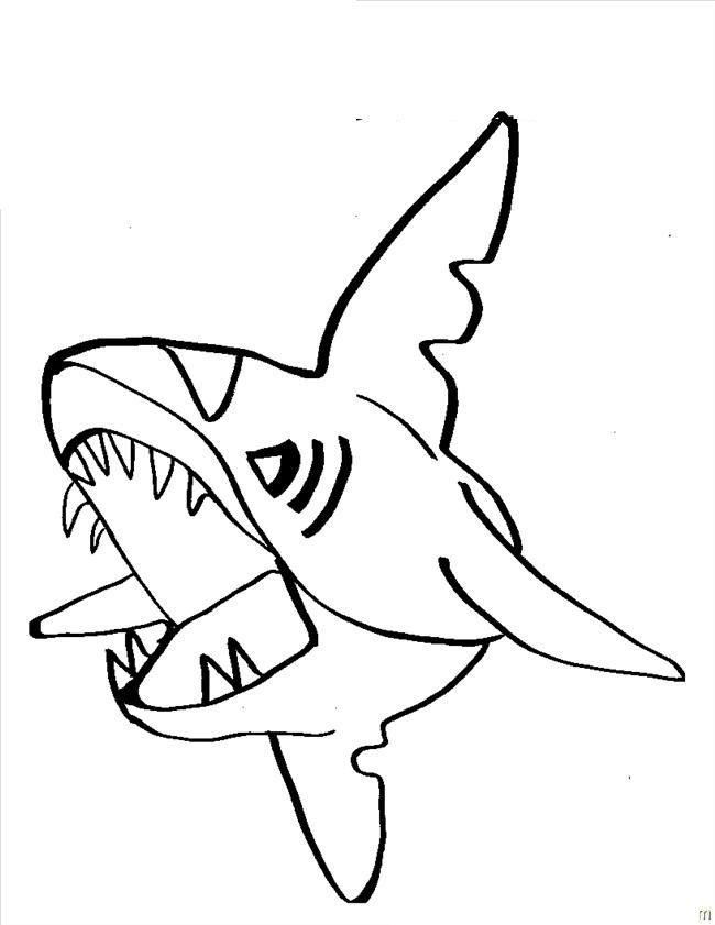 650x841 53 Best Sharks Images On Kids Net, Shark And Sharks