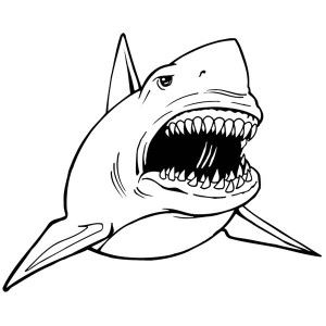 Shark With Mouth Open Drawing