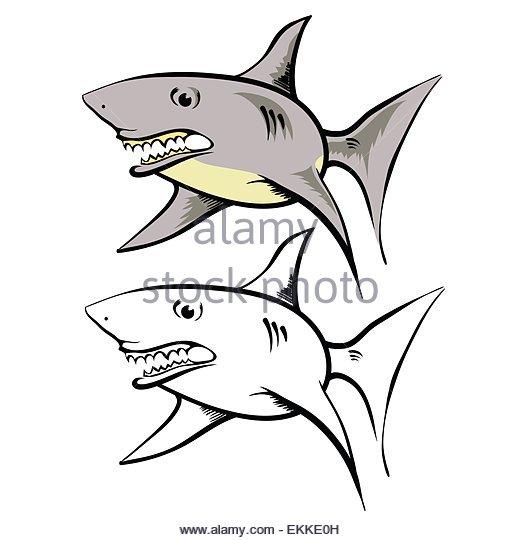 520x540 Gigantic Mouth Shark Stock Photos Amp Gigantic Mouth Shark Stock