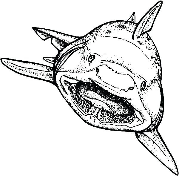 600x589 Jaws Coloring Pages