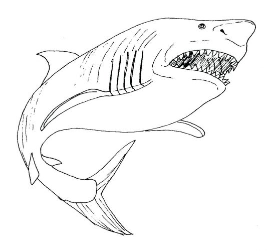 535x500 Coloring Page ~ Great White Shark Coloring Page Attack Pages Great