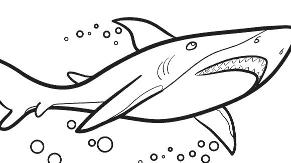 580x326 Great White Shark Coloring Page