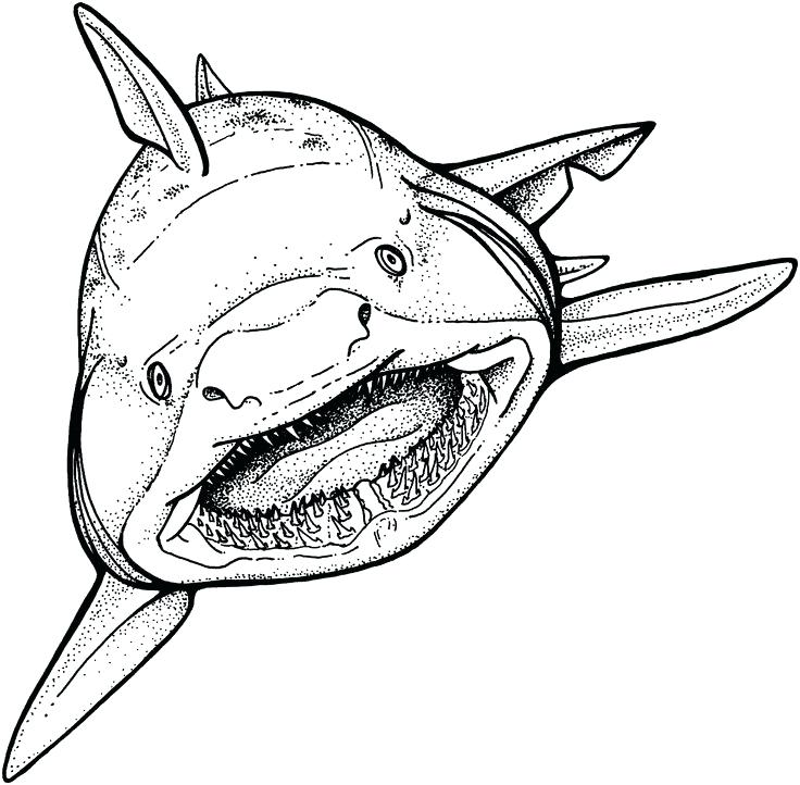 Shark With Mouth Open Drawing at GetDrawings.com | Free for personal ...