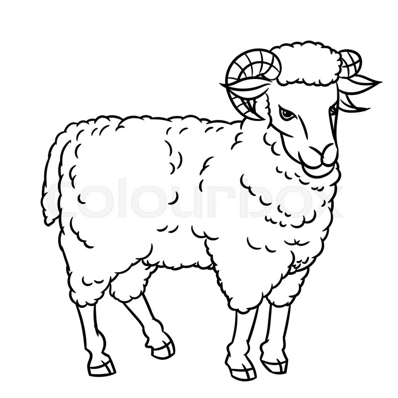 800x800 Hand Drawing Sheep Farm Animals Set Sketch Graphic Style Design