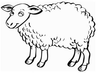 320x240 Sheep Pictures To Color Free Printable Sheep Coloring Pages