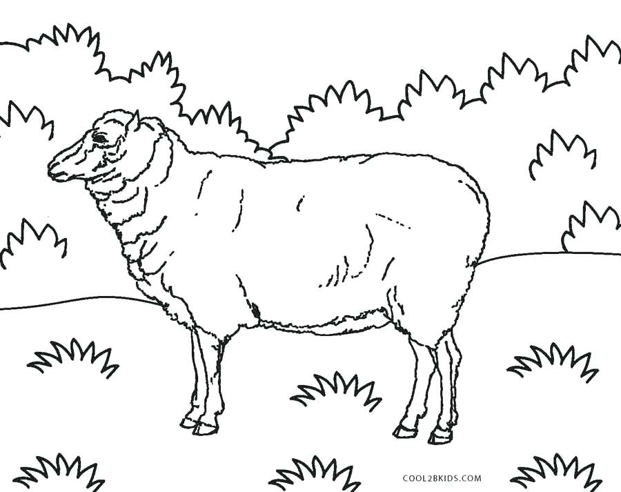 900x713 Sheep Coloring Pages Murs
