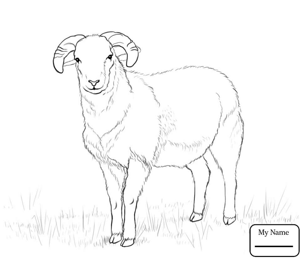 977x840 Cute Lamb Domestic Sheep Mammals Domestic Sheep Coloring Pages
