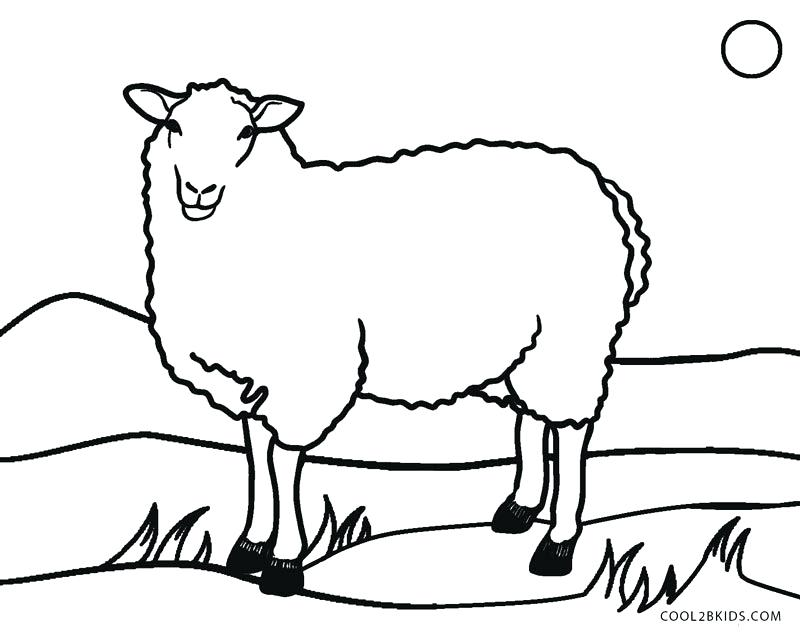 800x634 Top Rated Sheep Coloring Page Images Sheep Color Page Sheep Face