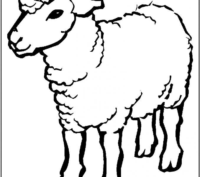 Sheep Images For Drawing at GetDrawings com | Free for