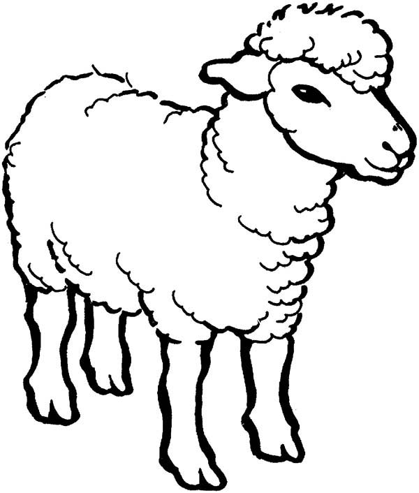 Line Drawing Images Of Sheep : Sheep line drawing at getdrawings free for personal