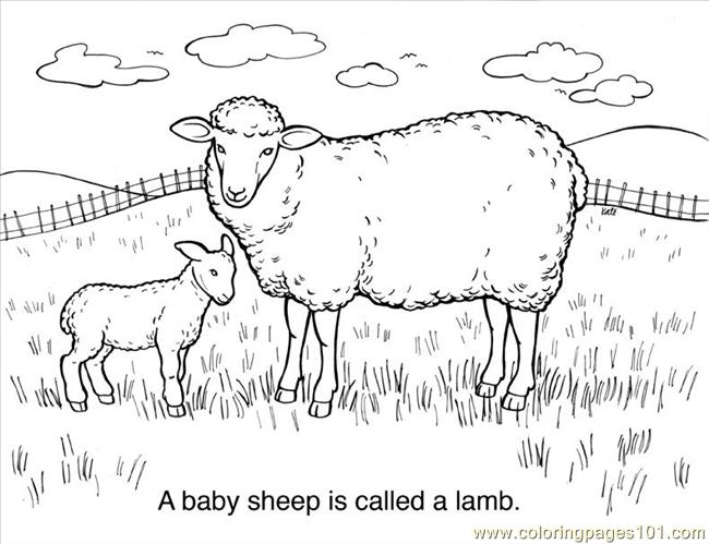 Sheep Line Drawing