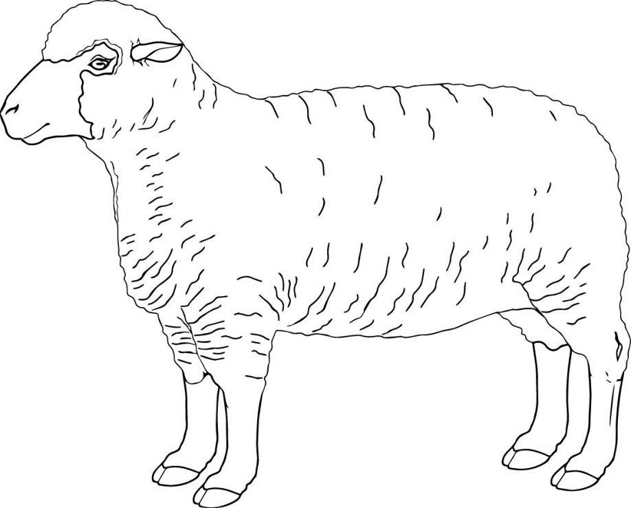 Sheep Outline Drawing at GetDrawings | Free download
