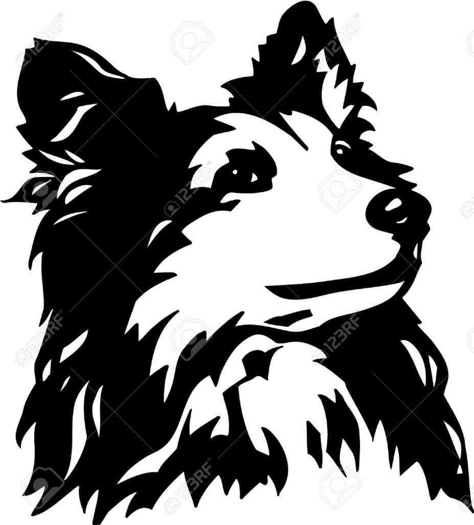 927x1027 Line Drawing Collie Clipart Sheepdog Pencil And In Color Scotch