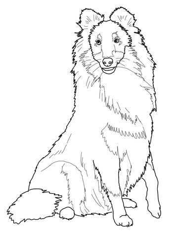 360x480 Sheltie Shetland Sheepdog Coloring Page Free Printable