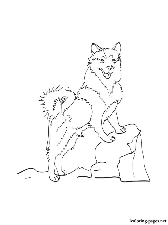 560x750 Icelandic Sheepdog Coloring Page Pages
