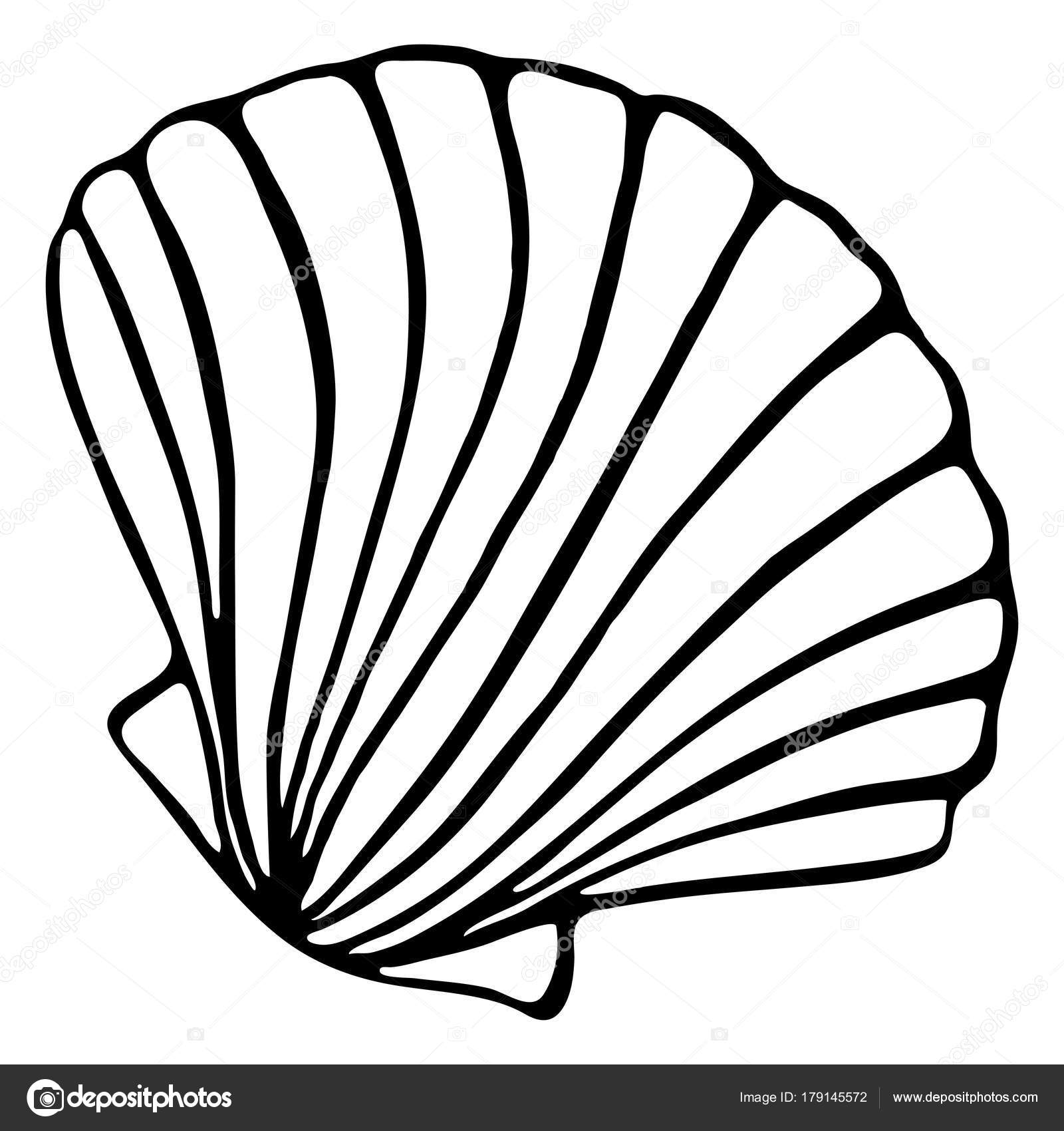 1600x1700 Monochrome Black And White Sea Shell Seashell Silhouette Ink Line