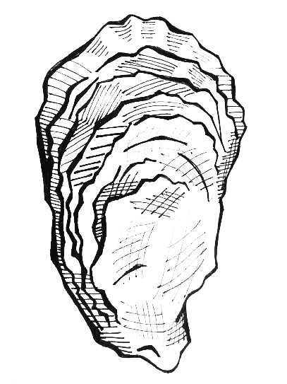 407x543 Oyster Coloring Pages