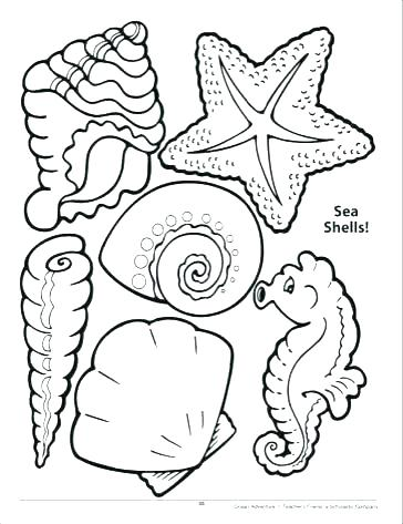 364x473 Sea Shell Coloring Page Decorative Sea Shell Outline Drawing