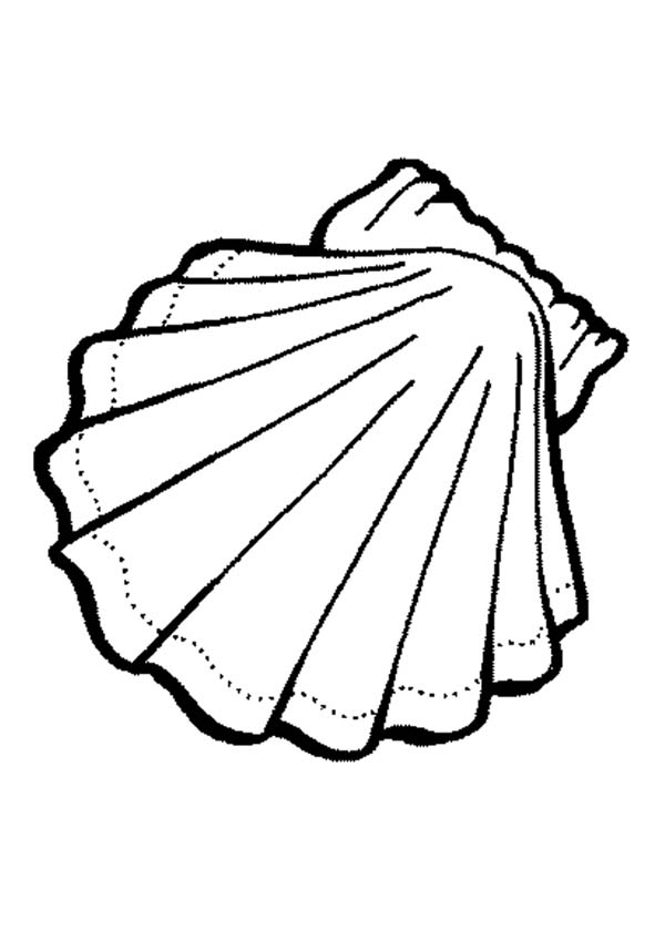 600x849 Seashell Coloring Pages Exquisite Calico Scallop Seashell Coloring