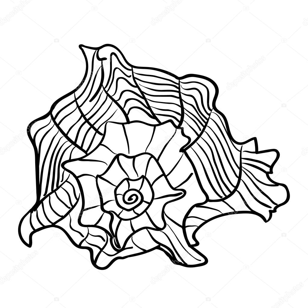 1024x1024 Caribbean Marine Hand Drawn Shell. Sketch Cut Out Vector Illustr