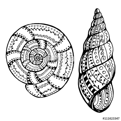 500x500 Two Shell Snails. Doodle. Zentangle. Drawing By Hand Stock Image