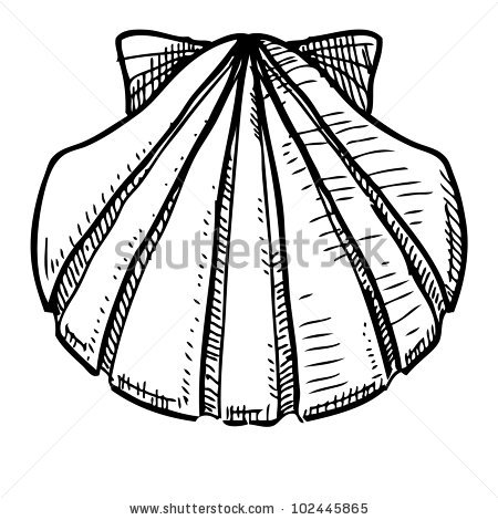 450x470 How Draw Conch Shell Save A Lightbox Please Login