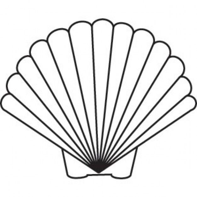 626x626 Seashell Drawing Scallop Shell Drawing Pictures Embroidery