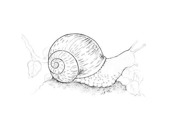 600x456 Drawn Shell Line Texture