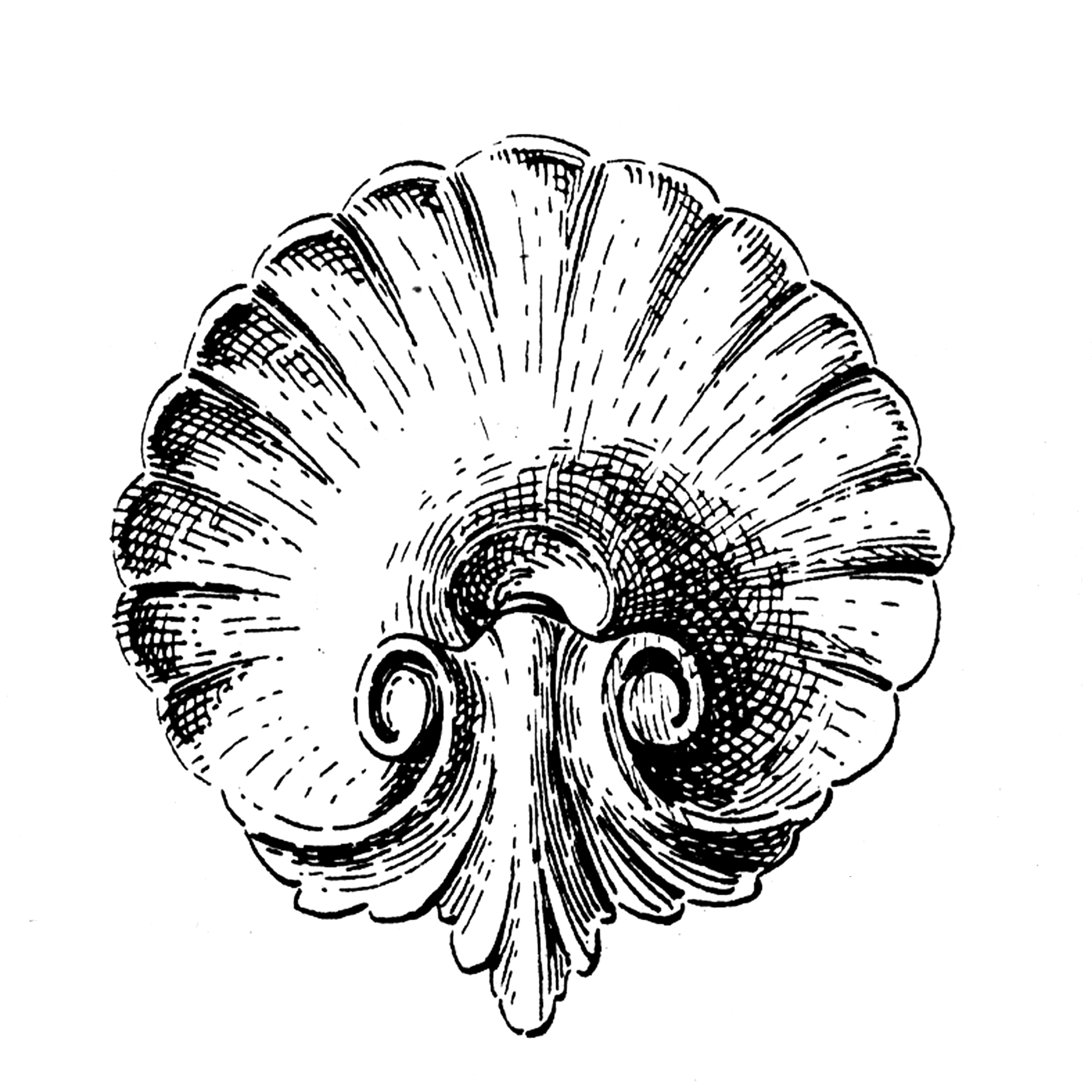 2295x2295 Old Shell And Acanthus Leaf Drawing Clip Art