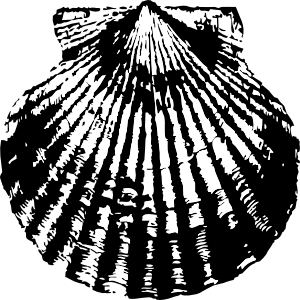 300x300 Scallop Shell Clip Art