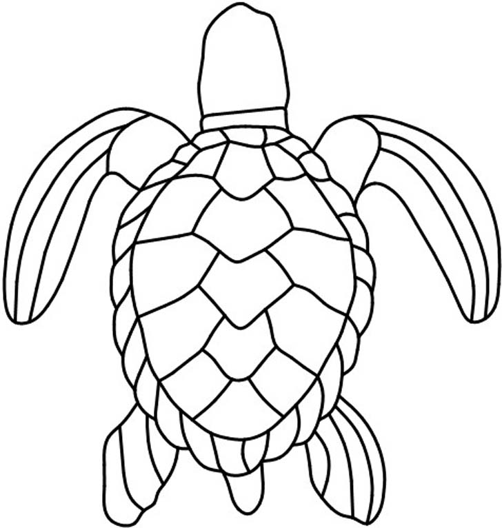 728x766 Turtle Drawing Cliparts