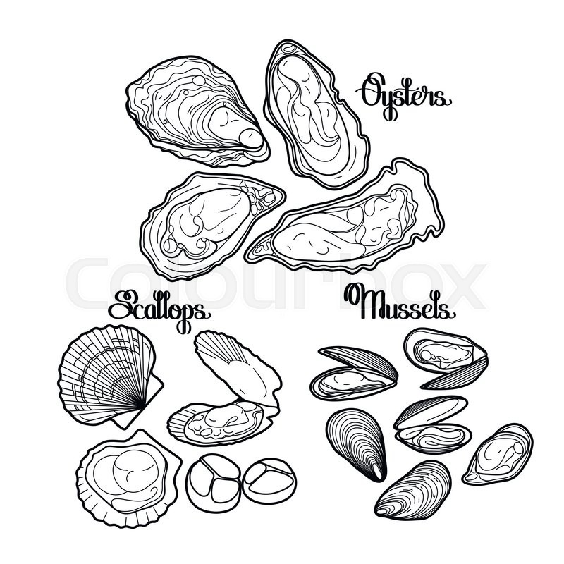 800x800 Graphic Vector Mussels, Oysters And Scallops Drawn In Line Art