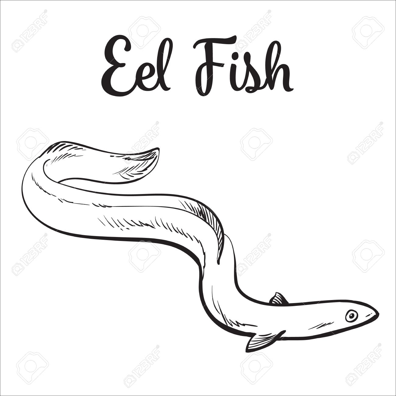 1300x1300 Live Eel Fish, Sketch Style Vector Illustration Isolated On White