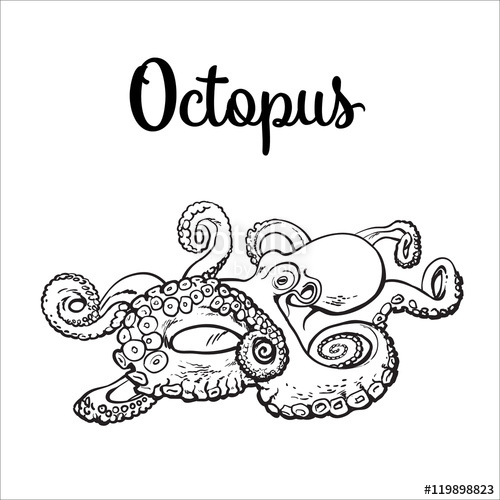 500x500 Live Octopus, Sketch Style Vector Illustration Isolated On White