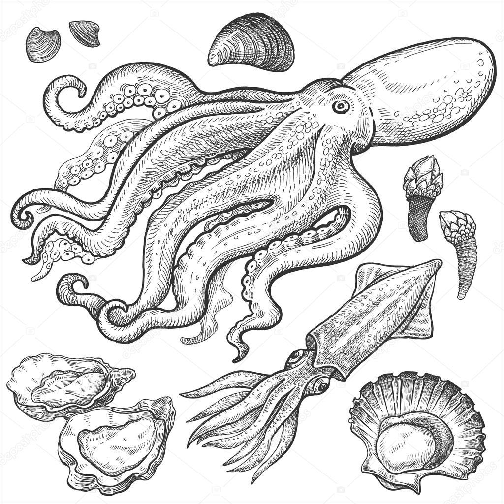 1024x1024 Set Hand Drawings Of Seafood. Stock Vector Sasha Kasha
