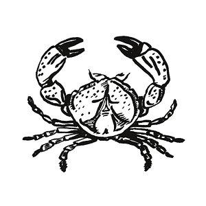 300x300 Shellfish Drawings Fine Art America