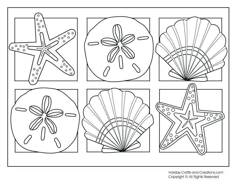 800x618 Sea Shell Coloring Page Decorative Sea Shell Outline Drawing