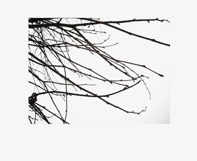 650x531 Deadwood Shelter Material Horizontally Long, Deep Color, Deadwood