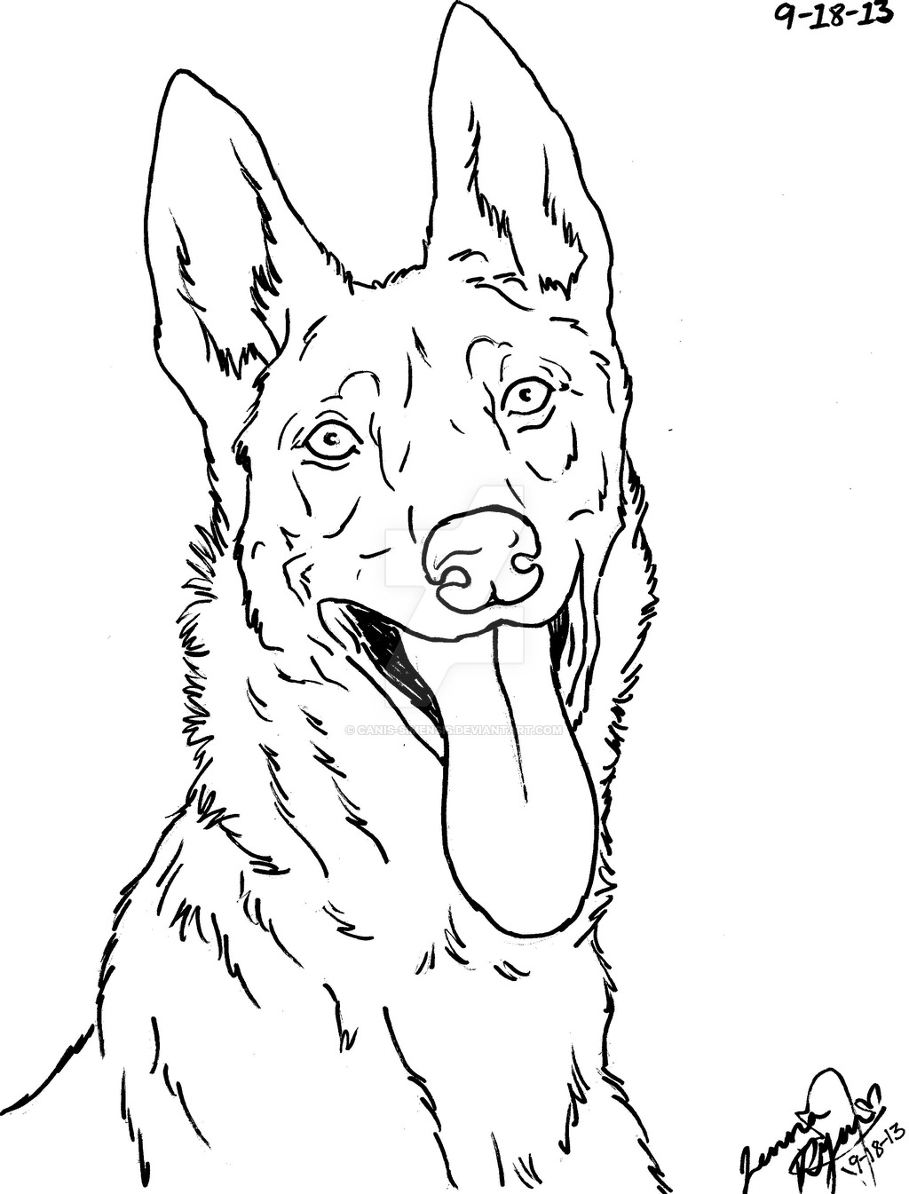 1024x1345 Dutch Shepherd Dog Lineart By Canis Simensis