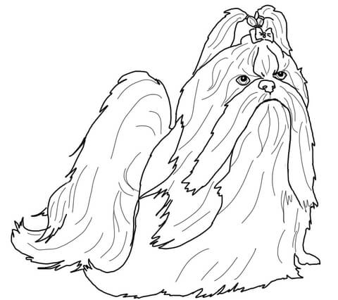This is a picture of Juicy Shih Tzu Coloring Pages