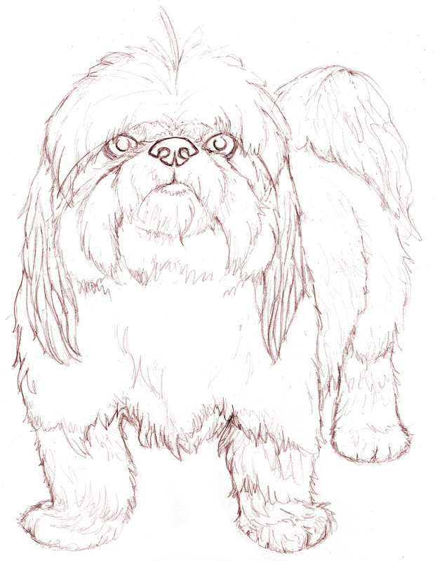 620x800 shih tzu by rgyoung on deviantart