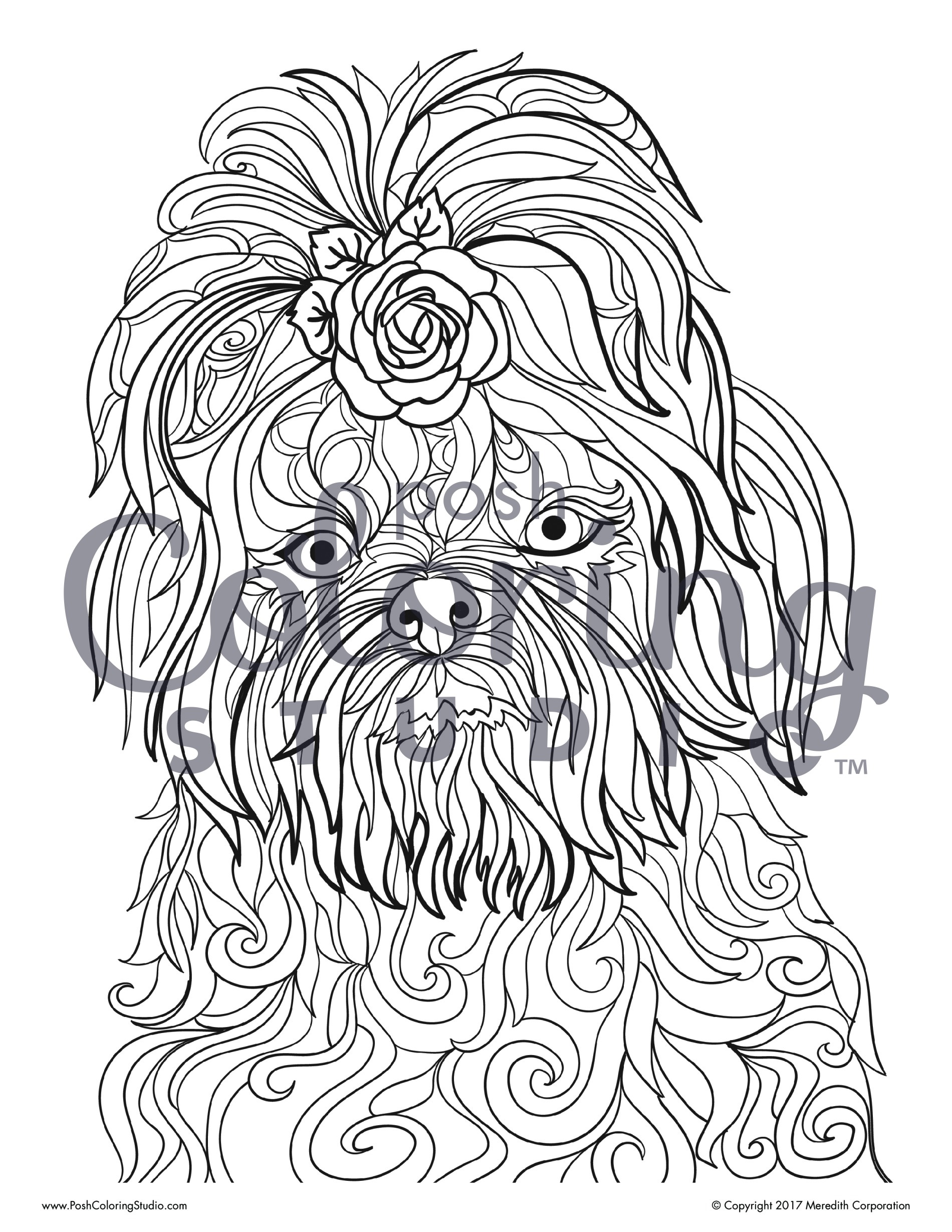 It's just a graphic of Lively Shih Tzu Coloring Pages