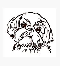 210x230 Black White Shih Tzu Drawing Photographic Prints Redbubble