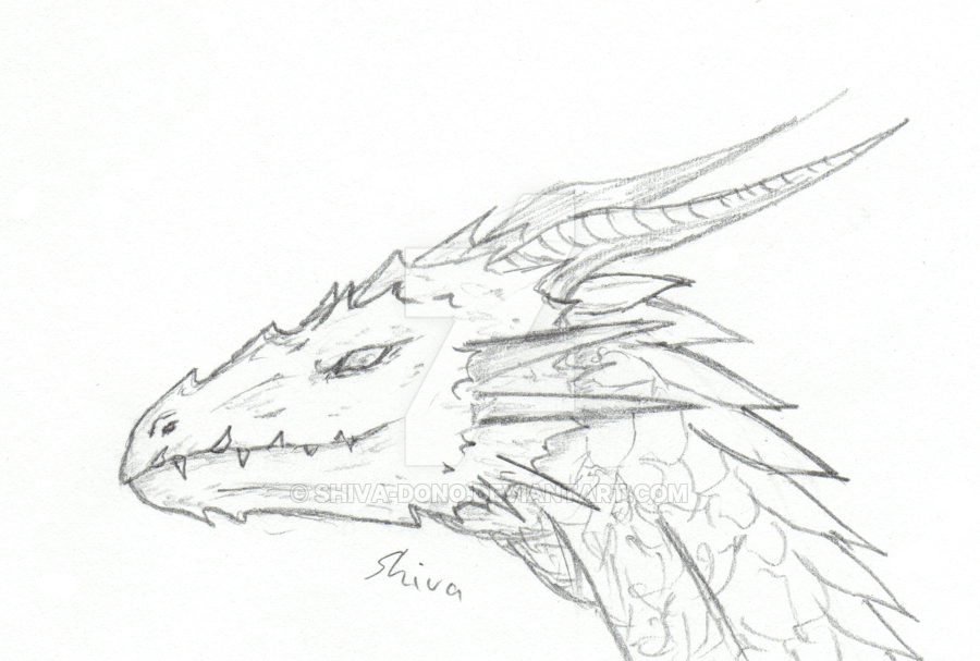 900x607 Dragon Head Sketch By Shiva Dono